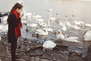 Mein lieber Schwan! Wasservögel zu füttern kann in manchen Städten ein hohes Bußgeld nach sich ziehen.