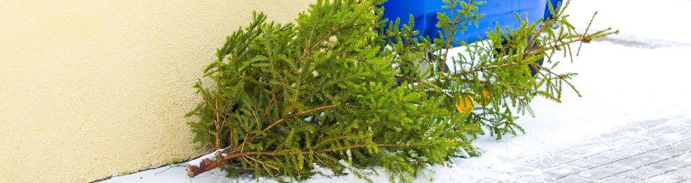Wie darf man einen Weihnachtsbaum entsorgen?