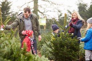 Einen Weihnachtsbaum zu fällen kann ein Event für die ganze Familie sein. Zum Service gehören oft auch Glühwein und Lagerfeuer. Die Preise sind verschieden.