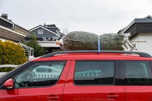 Den Weihnachsbaum richtig zu transportieren ist nicht schwer: Sie sollten ihn nur ausreichend sichern.
