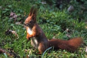Die Versicherung zahlt auch bei einem Wildunfall mit einem Kleintier, wenn es sich um Haarwild handelt