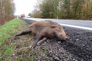 Ein vermehrter Wildwechsel fordert nicht nur menschliche Opfer.
