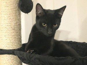 Katzenhaltung In Der Wohnung Tierschutz Tierhaltung 2019